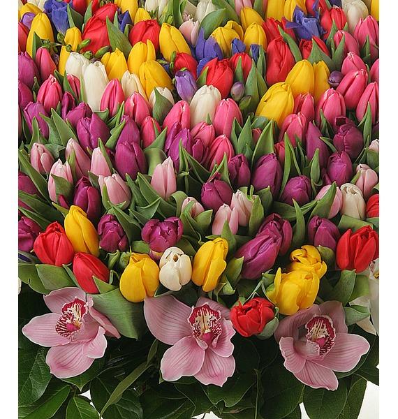Композиция из 301 тюльпана Счастливая весна – фото № 2