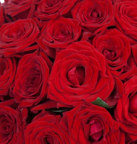 Букет роз Для Вас! (25, 51 или 75) – фото № 3
