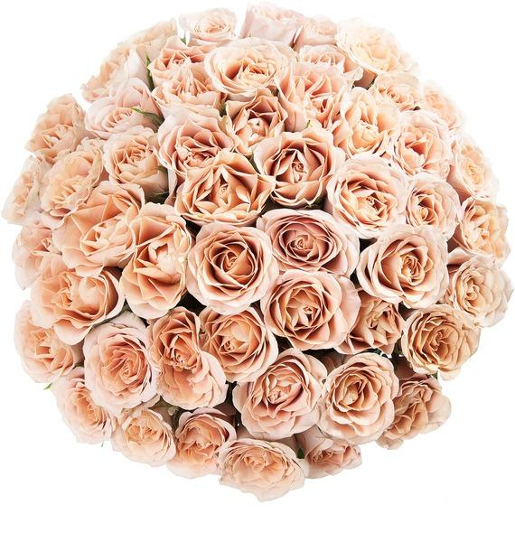 Букет роз Cappucino (25, 51 или 101) – фото № 4