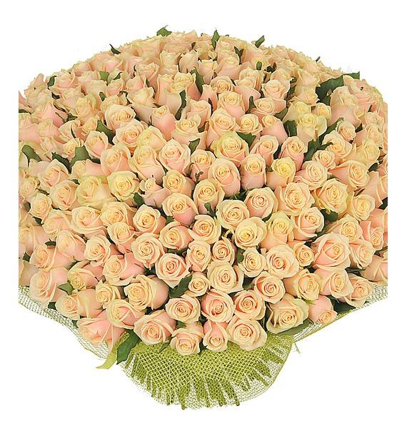 Букет из 251 кремовой розы Совершенство цена