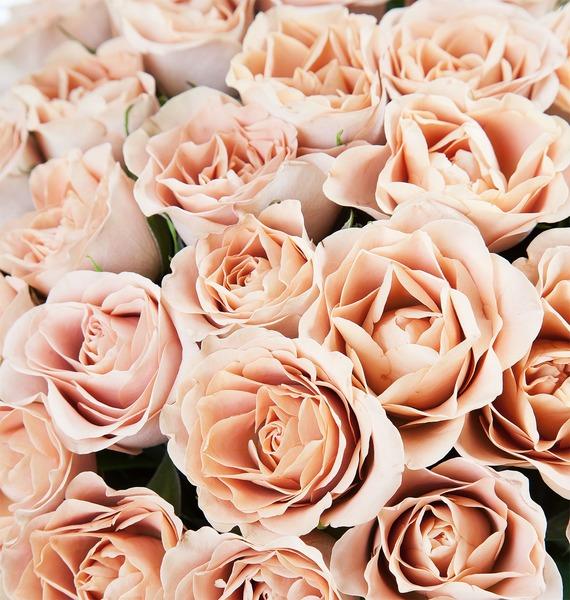 Букет роз Cappucino (25, 51 или 101) – фото № 3