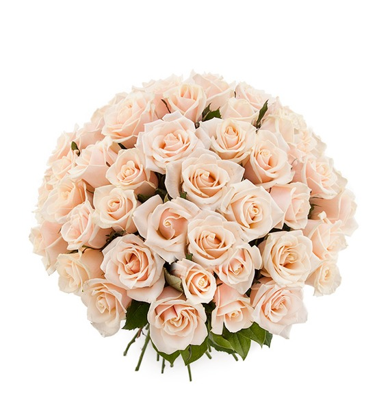 Букет из кремовой розы Гармония в любви (25, 51 или 101) цена