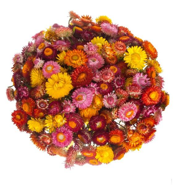 Букет из 101 Helichrysum – фото № 3