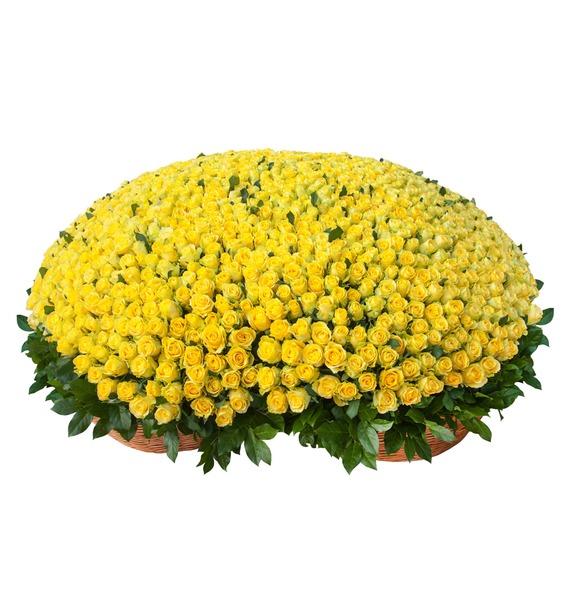Композиция из 501 или 1001 желтой розы Золото композиция из 201 розы мишень купидона