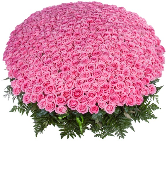 Композиция из 501 розовой розы Самой любимой