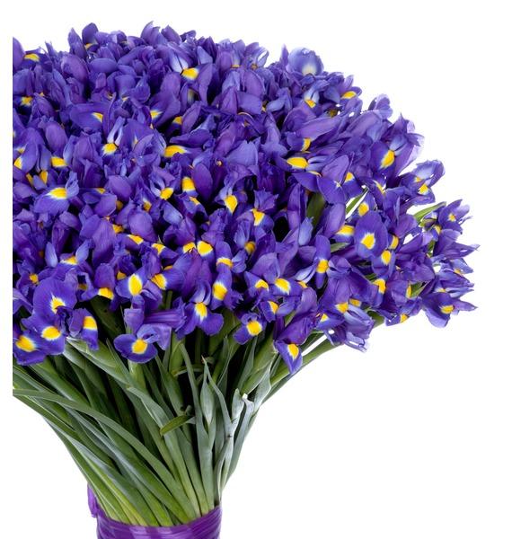 Bouquet of irises Favorite eyes (101, 151 or 201 iris) – photo #3