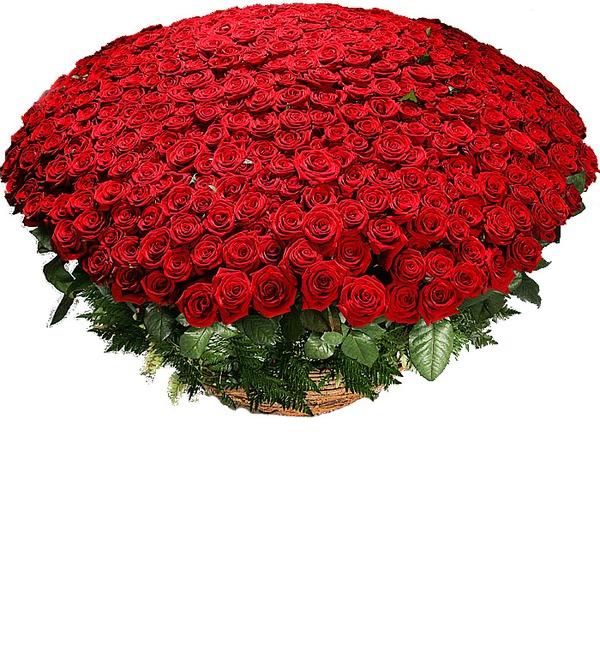 Композиция из 501 розы Гран При Любовь всегда права! SPBAR633 SAN – фото № 1
