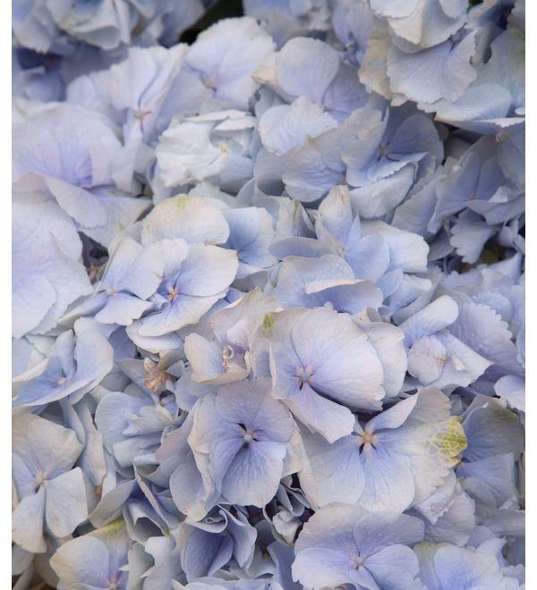 Букет-соло голубых гортензий (5,7,9,15,21 или 25) – фото № 2