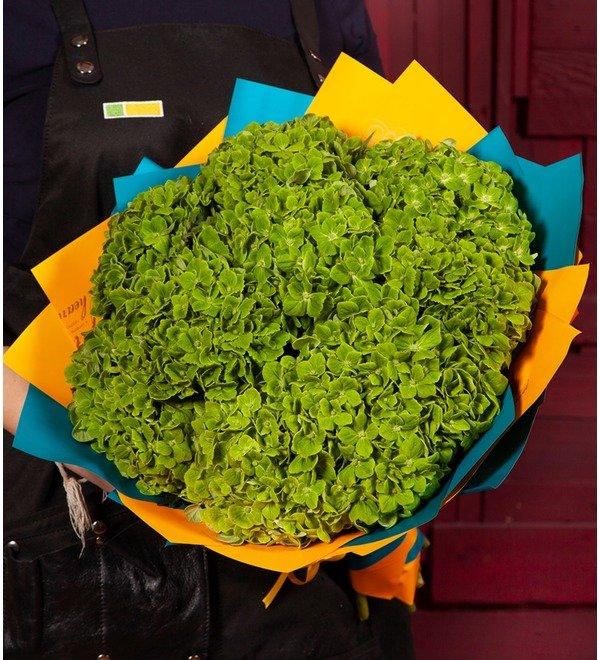 Букет-соло Зелёные гортензии (5,7,9 или 15) – фото № 1