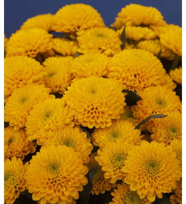 Букет-соло жёлтых хризантем (15,25,35,51,75 или 101) – фото № 2