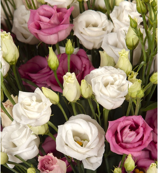 Bouquet-duet Eustoma (15,25,51 or 101) – photo #2