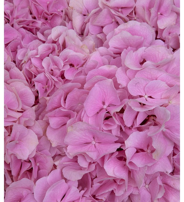 Bouquet-solo of pink hydrangeas (5,7,9,15,25 or 35) – photo #2