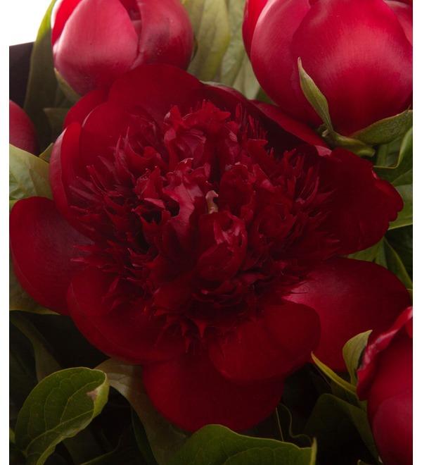 Букет-соло пионов Red Charm (9,15,25,35,51,75 или 101) – фото № 3