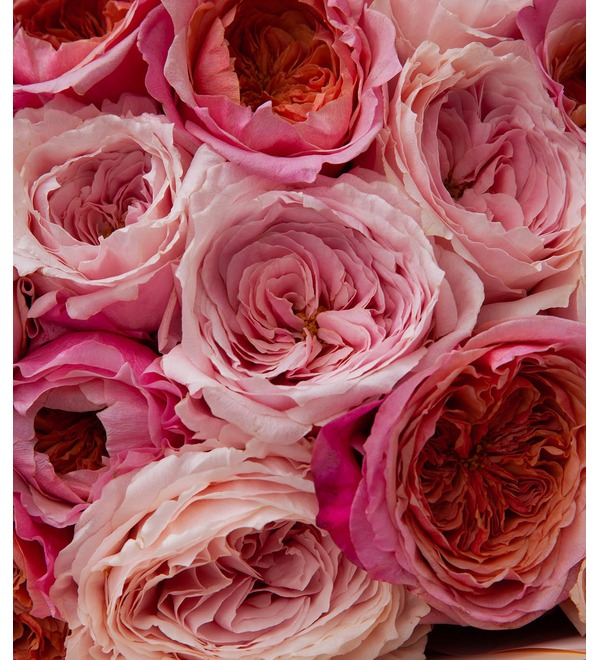Bouquet-duet of peony roses Concert under the Moon (15,25,35,51,75 or 101) – photo #3
