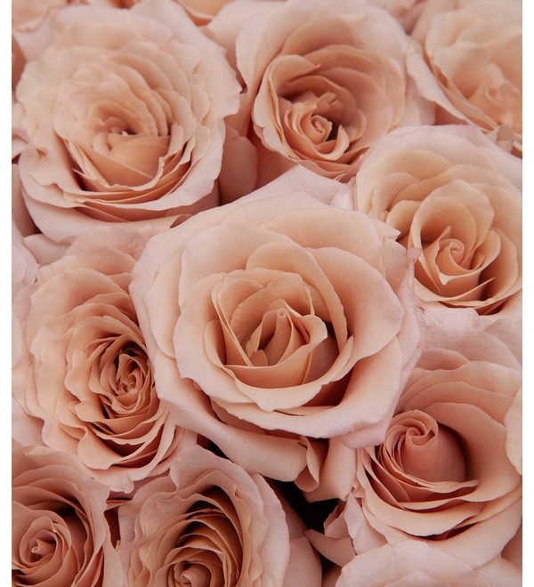 Bouquet-solo of Peony Rose Quicksand (15,25,35,51 or 75) – photo #2