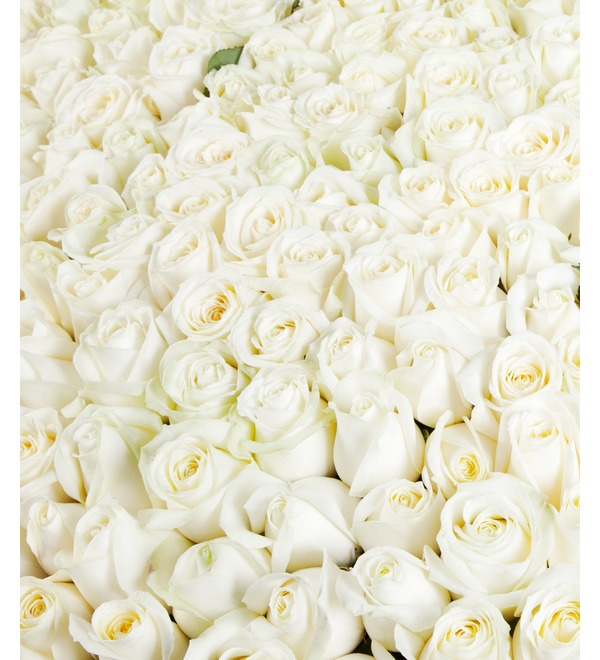 Композиция из 1001 белой розы Сердце Ангела AR691 SAN – фото № 3