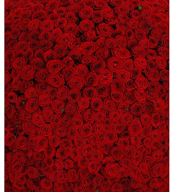 Композиция из 1001 розы Сенсация – фото № 5