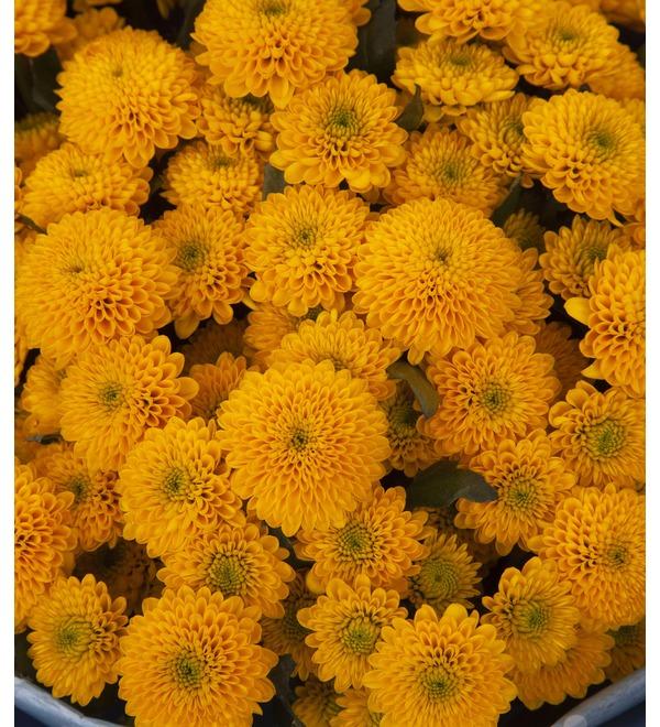 Букет-соло жёлтых хризантем (15,25,35,51,75 или 101) – фото № 3