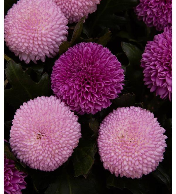 Букет-дуэт хризантем Вальс любви (15,21,35,51 или 75) – фото № 3