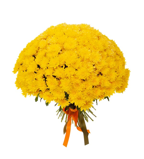 Букет-соло жёлтых хризантем (15,25,51,75 или 101) – фото № 4
