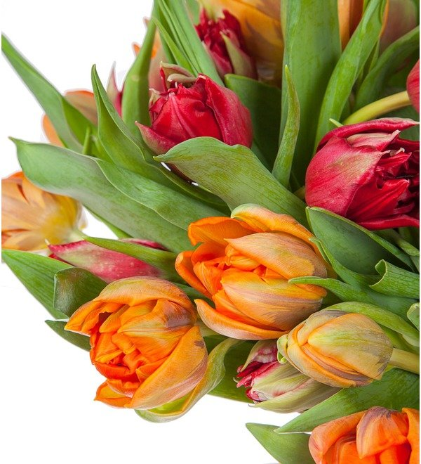 Букет-дуэт тюльпанов Королева (25,35,51,75 или 101) – фото № 3