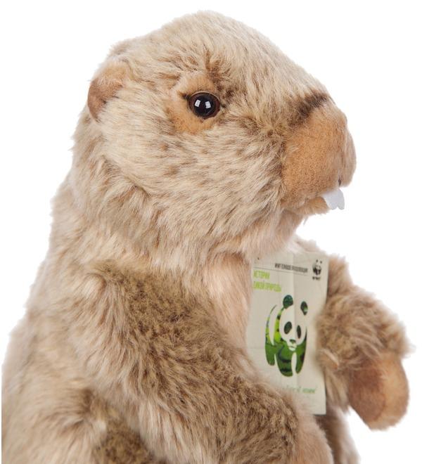 Soft toy Groundhog WWF (23 cm) – photo #2