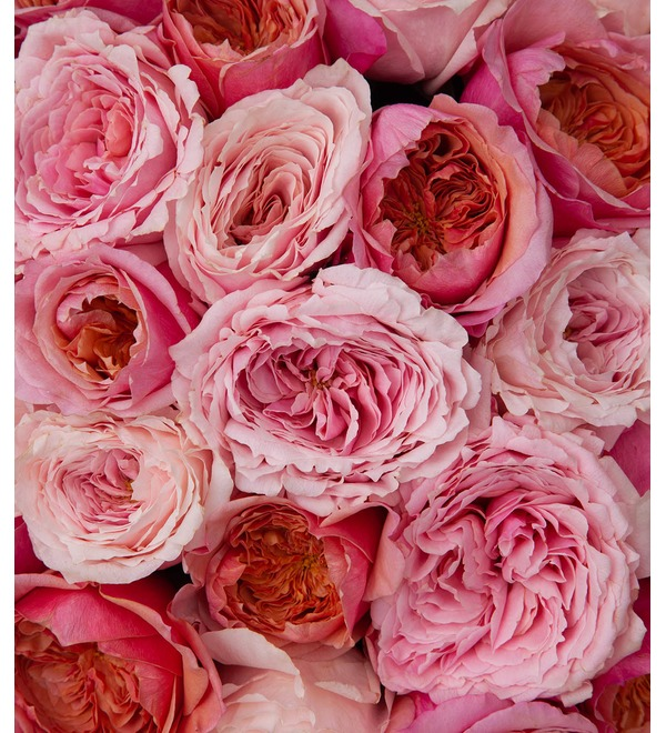 Bouquet-duet of peony roses Concert under the Moon (15,25,35,51,75 or 101) – photo #2