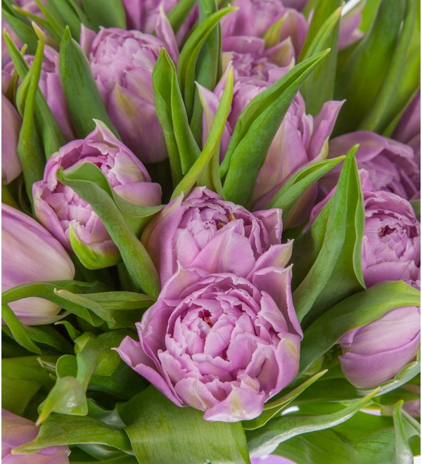 Bouquet of Double Price peony tulips (25, 51 or 101) – photo #3