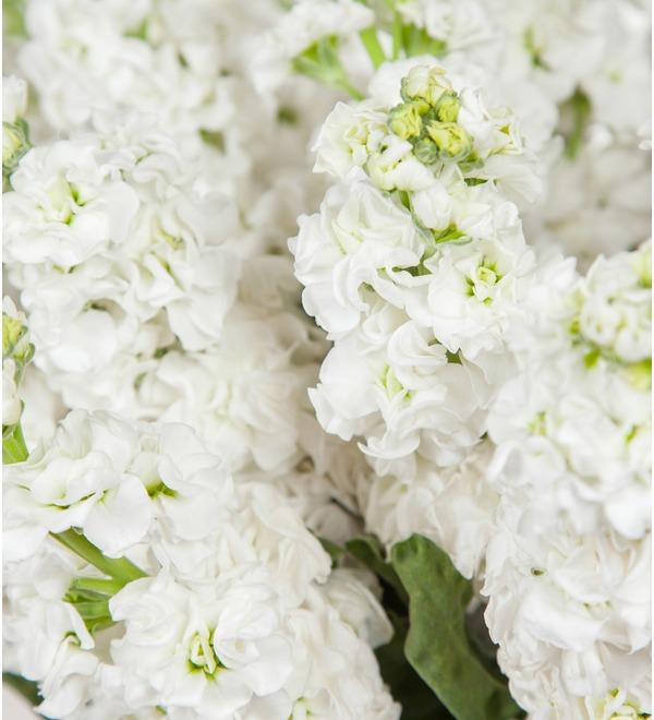 Букет белой маттиолы (15, 25 или 51) – фото № 2