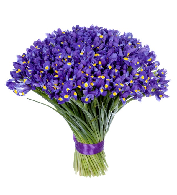 Bouquet-solo Blue irises (51,75,101 or 151) – photo #5