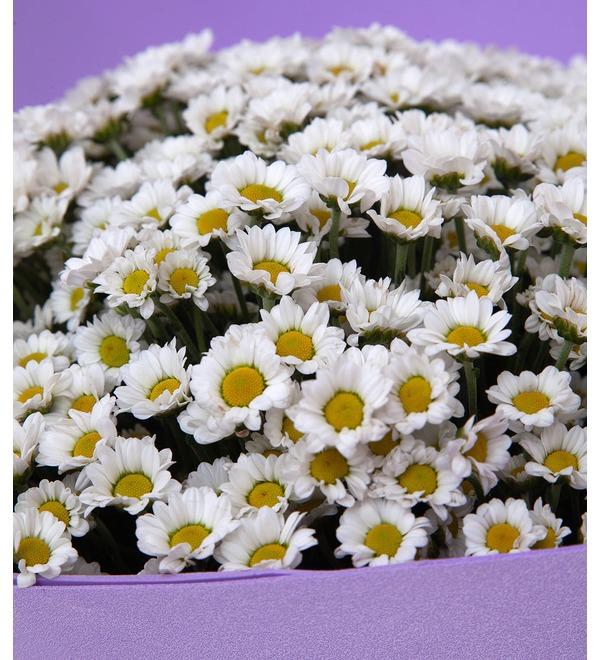 Букет-соло белых хризантем Сантини (15,25,35,51,75 или 101) – фото № 3