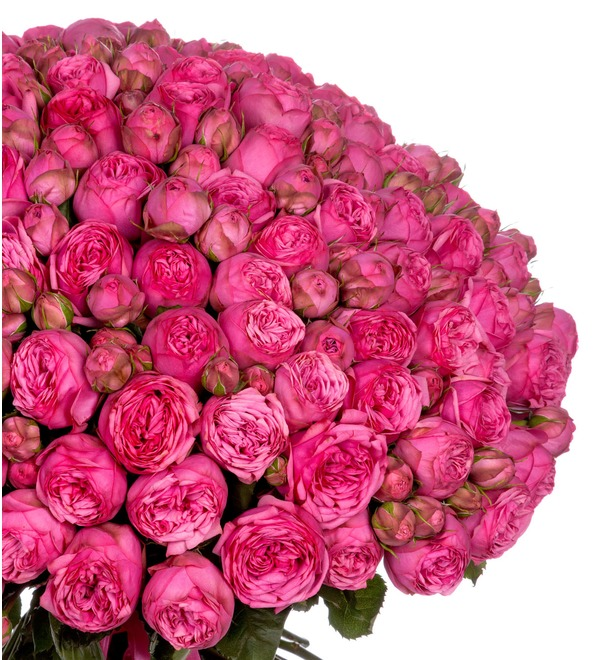 Bouquet of 151 pion-shaped roses Pink Piano – photo #3