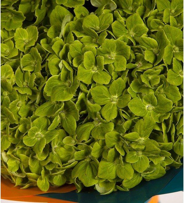 Букет-соло Зелёные гортензии (5,7,9 или 15) – фото № 2