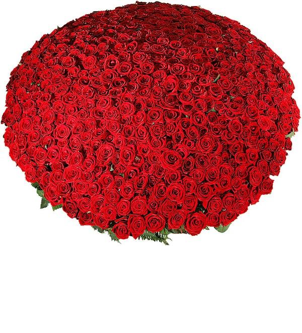 Композиция из 501 розы Гран При Любовь всегда права! SPBAR633 SAN – фото № 5
