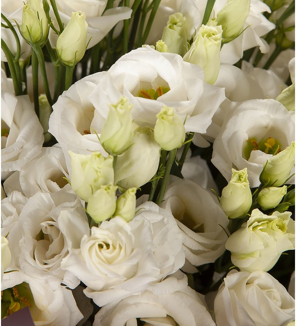 Bouquet-solo White eustoma (15,25,51 or 101) – photo #2