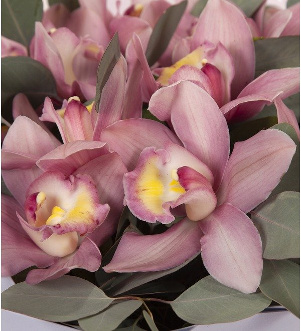 Букет-соло Розовые орхидеи (15,25,35,51,75 или 101) – фото № 2