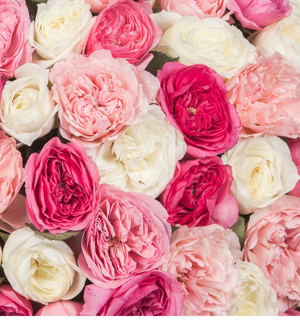 Composition of pion-shaped roses Delight (101, 201, 301) – photo #3