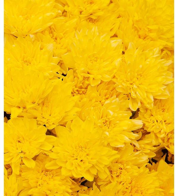 Букет-соло жёлтых хризантем (15,25,51,75 или 101) – фото № 2