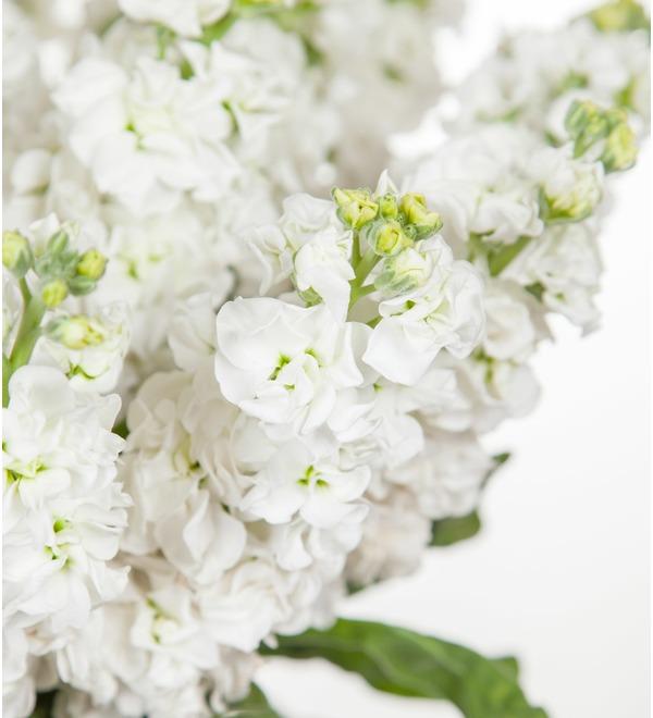 Букет белой маттиолы (15, 25 или 51) – фото № 3
