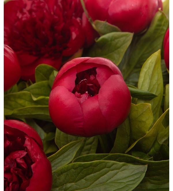 Букет-соло пионов Red Charm (9,15,25,35,51,75 или 101) – фото № 2