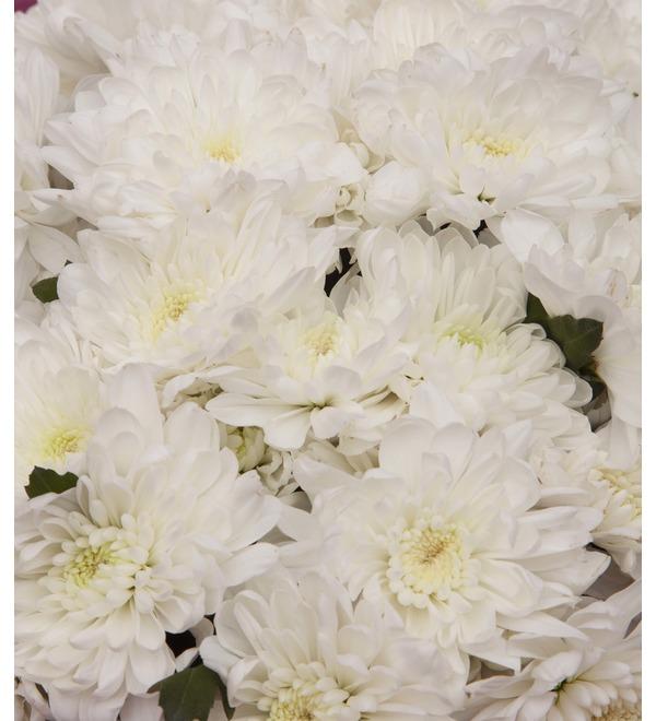 Букет-соло белых хризантем (9,15,25,35,51,75 или 101) – фото № 2