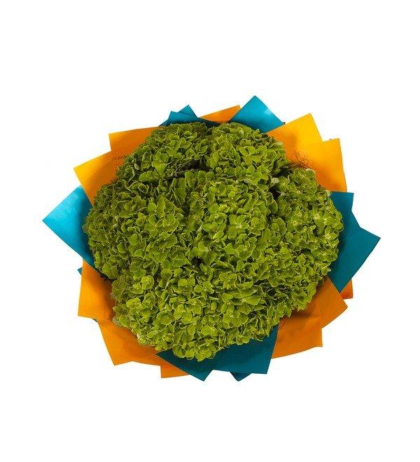 Букет-соло Зелёные гортензии (5,7,9 или 15) – фото № 3
