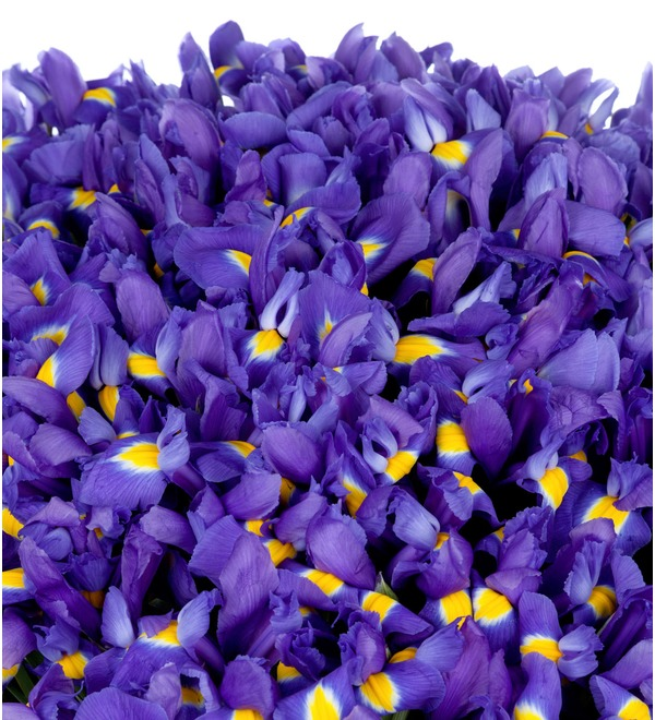 Bouquet-solo Blue irises (51,75,101 or 151) – photo #2