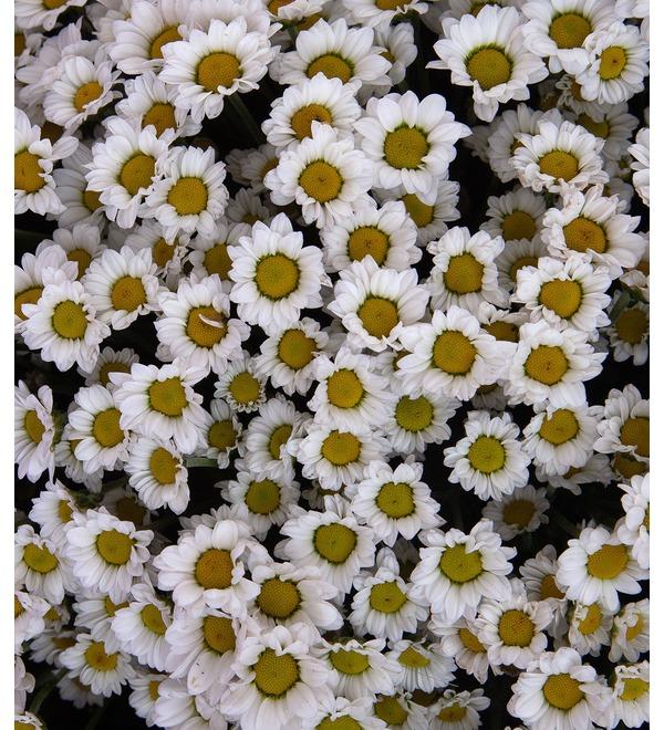 Букет-соло белых хризантем Сантини (15,25,35,51,75 или 101) – фото № 4