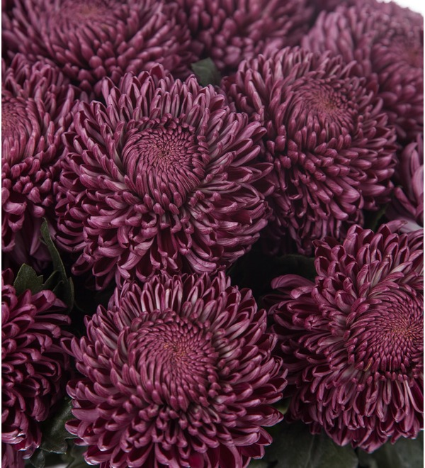 Букет-соло хризантем Bigoudi Purple (9,15,21,35 или 51) – фото № 2