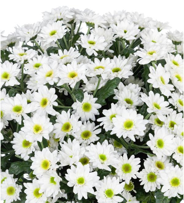 Букет-соло Белые хризантемы (15,25,51 или 101) – фото № 4