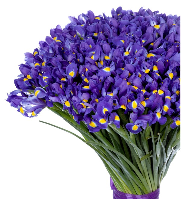 Bouquet-solo Blue irises (51,75,101 or 151) – photo #4