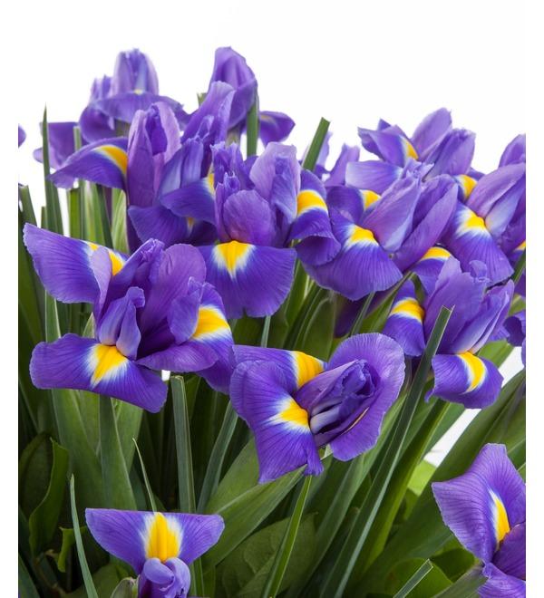 Bouquet of irises Blue Magic (51 or 101 of the iris) – photo #3