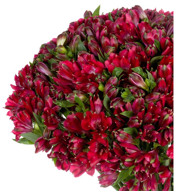 Bouquet Ruby (25, 51 or 101 alstroemeria) – photo #4