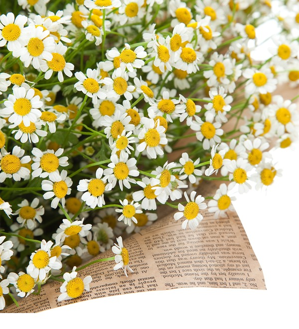 Bouquet Daisies for a wonderful girl – photo #3